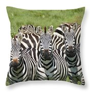 Zebra10 Throw Pillow