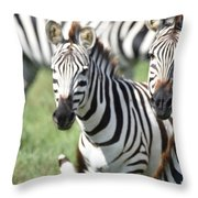 Zebra3 Throw Pillow
