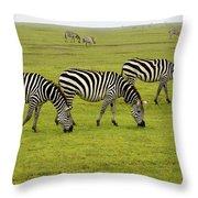 Zebra6 Throw Pillow