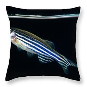 Zebrafish Danio Rerio Throw Pillow