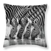 Zebras Drinking Throw Pillow