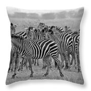 Zebras On The March Throw Pillow