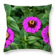 Zennia Triplet Throw Pillow