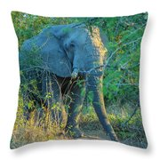 Zimbabwe Bull Elephant Throw Pillow