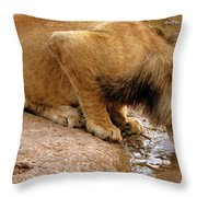 Zimbabwe Throw Pillow
