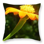Zinnia Angustifolia Stem Throw Pillow