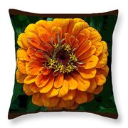 Zinnia At Frankenmuth Throw Pillow