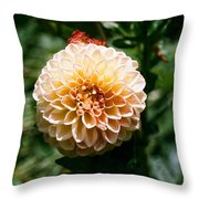 Zinnia  Throw Pillow