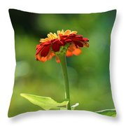 Zinnia Flower Throw Pillow