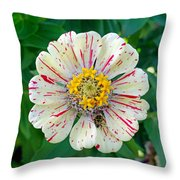 Zinnia Guest Throw Pillow