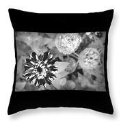 Zinnia In Black And White  Throw Pillow