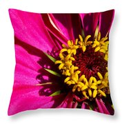 Zinnia In Evening Light Throw Pillow