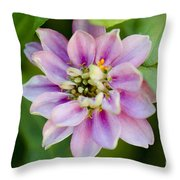 Zinnia In Pink Throw Pillow
