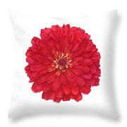 Zinnia In Red Throw Pillow