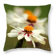 Zinnia Named Zahara Starlight Rose Throw Pillow