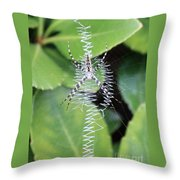 Zipper Spider Throw Pillow