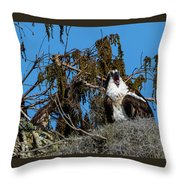 Zombie Osprey Crying For Brains Throw Pillow