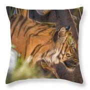 Zoo8 Throw Pillow