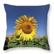 Bee On Blooming Sunflower Throw Pillow