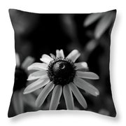 Black-eyed Susan  Throw Pillow by Jeff Phillippi