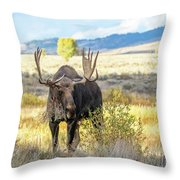 Bull Moose Throw Pillow by Michael Chatt