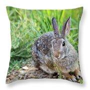 Cottontail Rabbit Throw Pillow by Michael Chatt