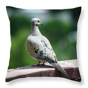 Dove On The Deck Throw Pillow