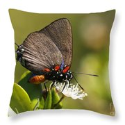 Great Purple Hairstreak Throw Pillow