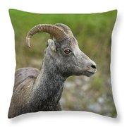 Stone's Sheep Throw Pillow