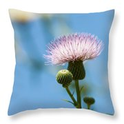 Thistle With Blue Sky Background Throw Pillow