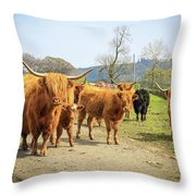 Highland Cattle  Throw Pillow