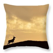 Strathglass Silhouette Throw Pillow by Gavin MacRae