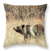 Grizzly Bear Throw Pillow by Michael Chatt