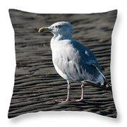 Seagull On Beach Throw Pillow
