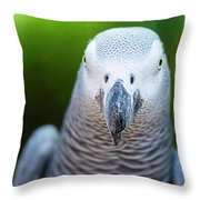 African Grey Parrot Throw Pillow by Rob D Imagery