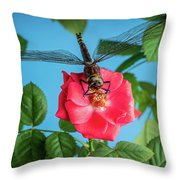 Dragonfly On A Flower Of A Red Rose. Macro Photo Throw Pillow