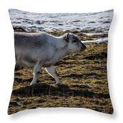 Svalbard Reindeer Throw Pillow