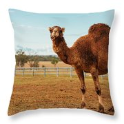 Large Beautiful Camel Throw Pillow