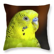 Portrait Of Budgie Birds Throw Pillow