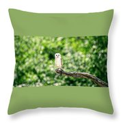 Beautiful Barn Owl Throw Pillow by Rob D Imagery
