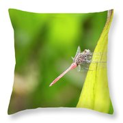 Small Beautiful Dragonfly Throw Pillow
