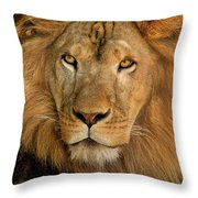 656250006 African Lion Panthera Leo Wildlife Rescue Throw Pillow by Dave Welling