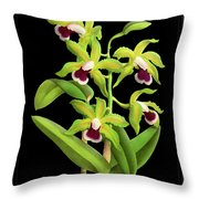 Vintage Orchid Print On Black Paperboard Throw Pillow