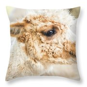 Alpaca In A Field. Throw Pillow by Rob D Imagery