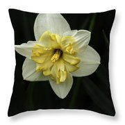 A Beautiful Narcissus Throw Pillow