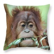 A Close Portrait Of A Young Orangutan Eating Leaves Throw Pillow