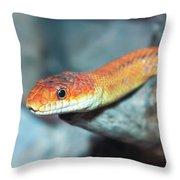 A Close Up Of A Ground Snake Throw Pillow