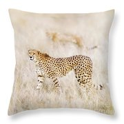 A Pair Of Cheetahs Move Steathily Through The Long Grass Of The  Throw Pillow