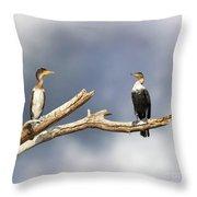 Adult And Juvenile Cormorants At Lake Naivasha Throw Pillow