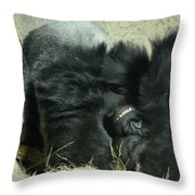 Adult Silverback Gorilla Laying Down With Anguished Expression Throw Pillow
